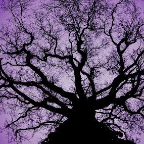Le chêne de charent by Romain Bruot - Nature Up Close Trees & Bushes