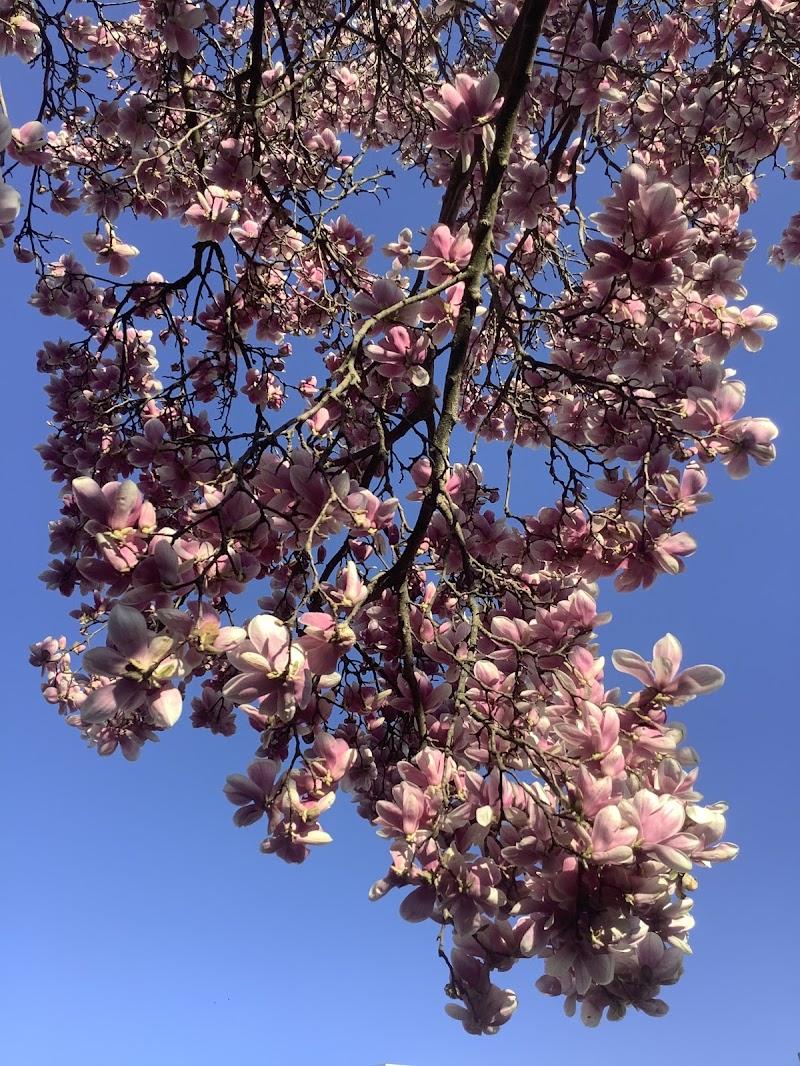 La primavera sembra scendere dal cielo di Pierafff