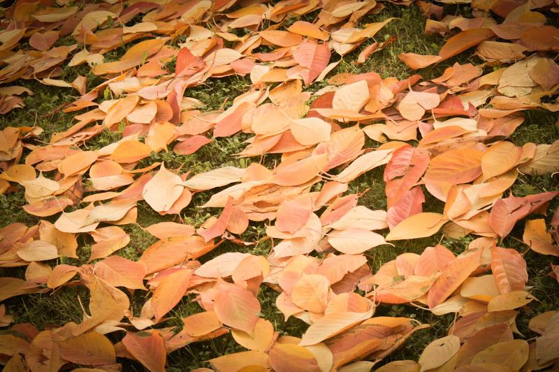 Foliage di Mary_86