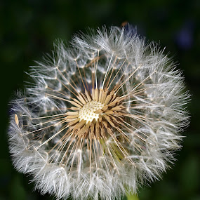 natures clock by Sue Rickhuss - Nature Up Close Other plants (  )