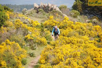 Photo: Пробираясь сквозь туман, и поднявшись на высоту, где участников поездки ждал отличный синглтрек, облака разлетелись, открыв прекрасную панораму на Пиренейские горы, устланные цветущими кустарниками. И главная проблема этого дня – это частые остановки для фотосессии.  Место съемки: Каталония (Испания) Поездка: велотур «По местам Гауди и Дали от Пиренеев к Средиземному морю» Автор: Мария Завирюхина