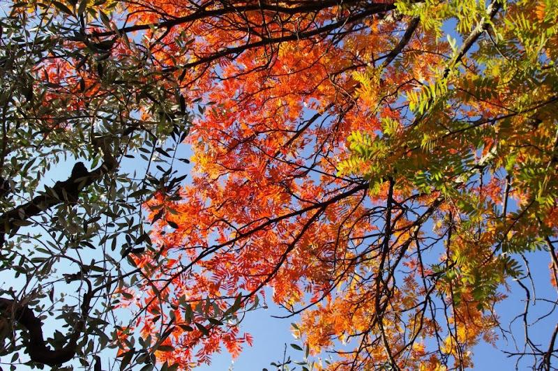 Tricolore autunnale.  di micphotography
