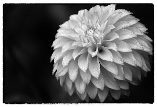 Photo: Conservatory of Flowers #2 - © Ricardo Lagos - Creative Commons (CC BY-NC 3.0)