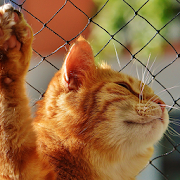 dancing cat live wallpaper