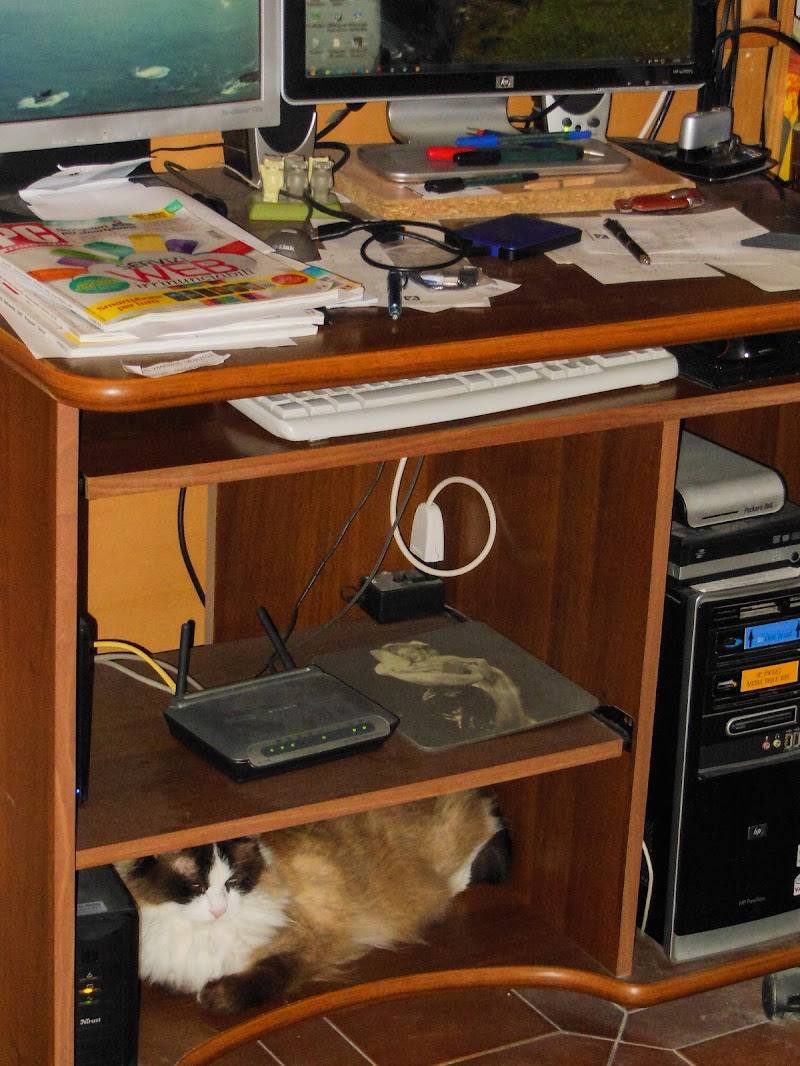 Disordine con gatto di Giò Volpi
