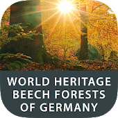World Heritage Beech Forests