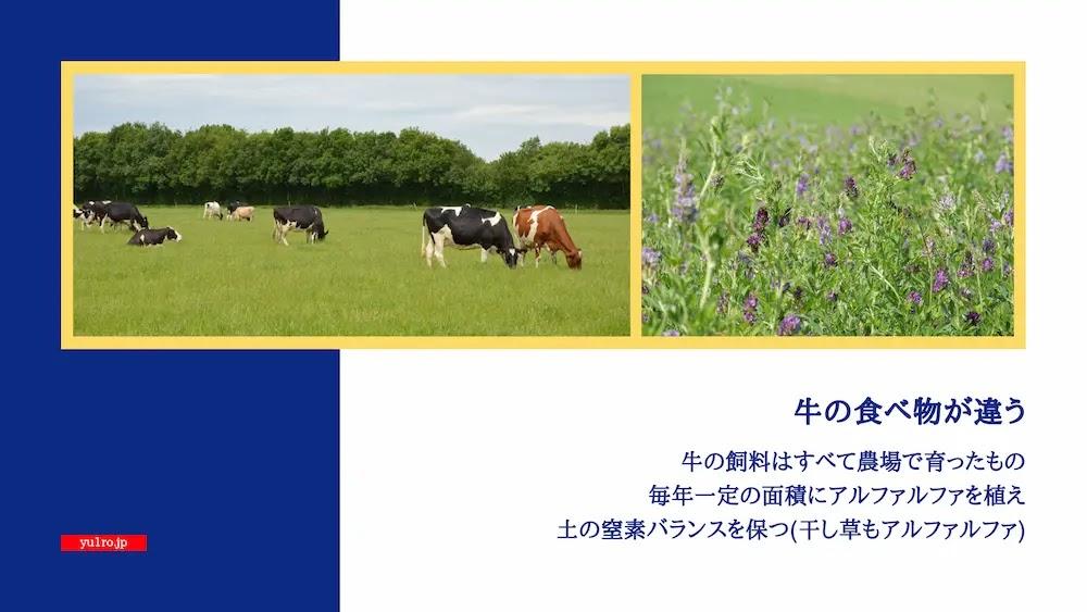 乳牛の生育環境も違います、ルツェルン(アルファルファ)も大事