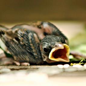 sparrow by Arslan Mughal - Animals Birds ( Emotion, portrait, human, people )