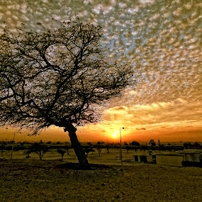 Awali Sunset by Tyrone de Asis - Landscapes Prairies, Meadows & Fields ( clouds, awali, tree, sunset, weather, tary, bahrain sunset, bahrain, landscape )