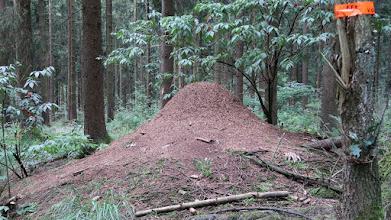 Photo: Nid de fourmis des bois