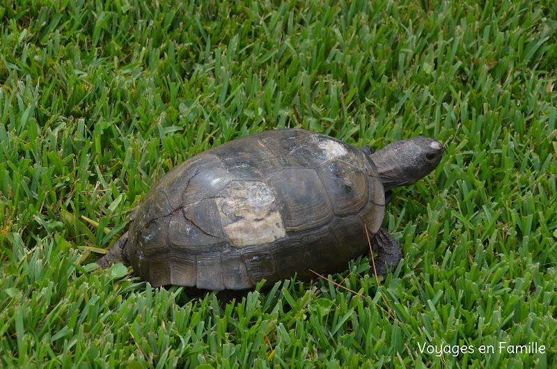 turtle center jekyll island