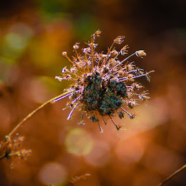 Dry  by Selene Andreasen - Nature Up Close Leaves & Grasses