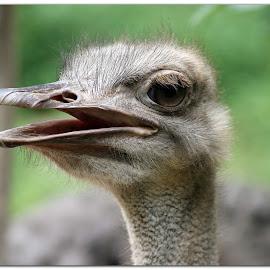 EYE by Diwakar Rao - Animals Birds