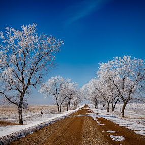 Frosty Road by Kendra Perry Koski - Landscapes Prairies, Meadows & Fields ( counntry road, reliance, united states, winter, cold, clouds, hoarfrost, trees, 2019, dakota winds photography, winner, blue, white, lyman county, road, january, light, frost, snow, hdr, sunset, south dakota )