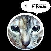 KamiBag MOMO 1 Cat App