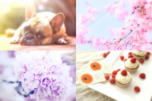 Soft Focus : SoftPhotoFluffy