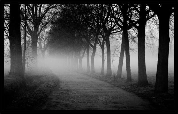 Nebbia di hylablu