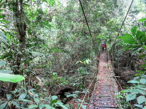 How to Organize your Trip to See Wild Orangutans in Kutai National Park // Crossing a slippery wooden bridge in the Borneo Jungle