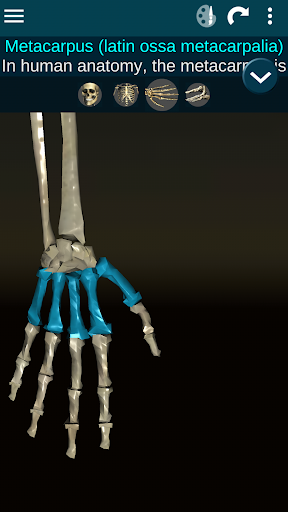 Osseous System in 3D (Anatomy) Screenshot