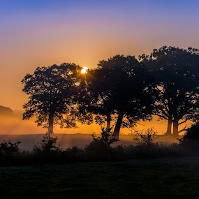 Silhouetted Trees by David Stone - Landscapes Prairies, Meadows & Fields ( appleton farm, fog, silhouettes, trees, sunrise, landscape, #GARYFONGDRAMATICLIGHT, #WTFBOBDAVIS,  )