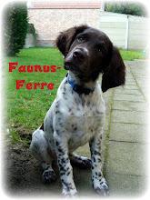 Photo: FAUNUS-FERRE puppy