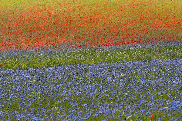 flowers di RobertaSilvestro