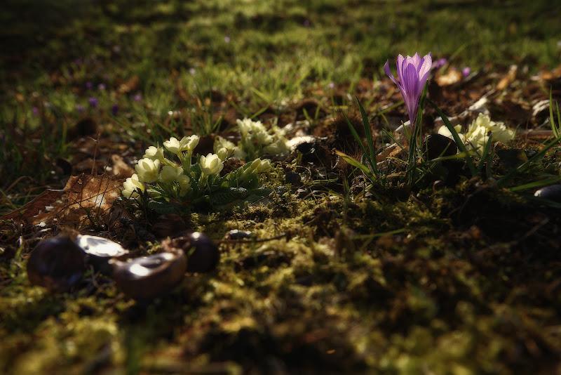 Dopo l' Inverno... Arriva la Primavera di simon_rohl