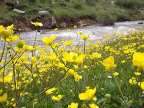 Photo: Sarot Yaylası / Dere Kasabası / Bozkır / Konya Dere kenarında yağlı çiçekler.