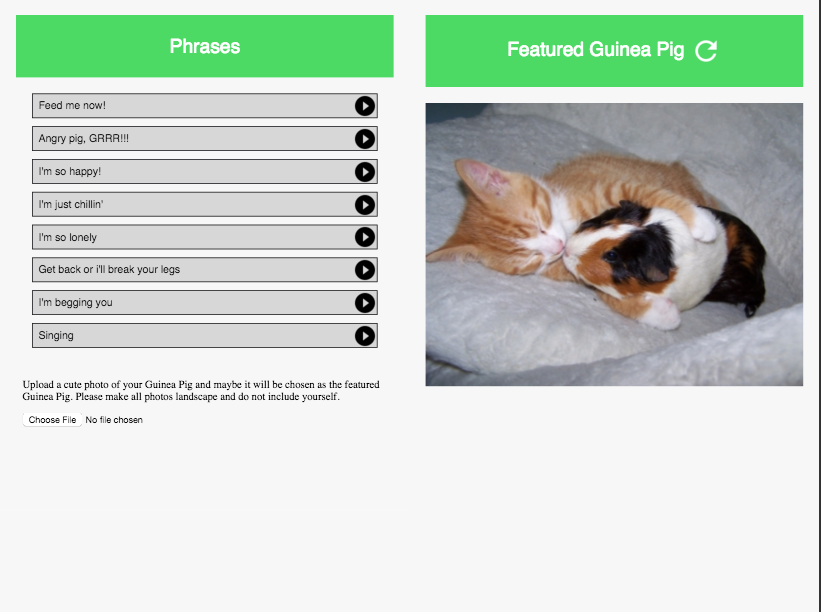 Guinea Pig Communicator- screenshot