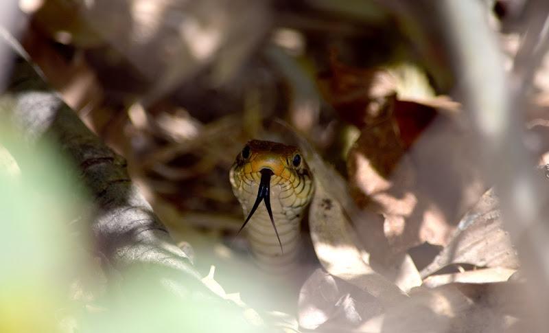 Serpente arrabiato di irina sirbu