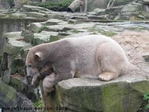 Photo: Knut schaut neugierig in den Wassergraben ;-)