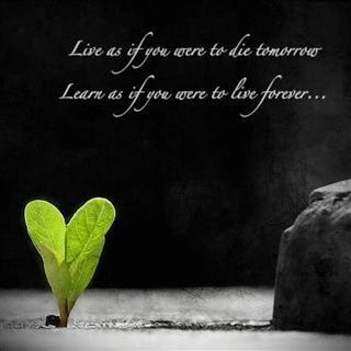 Free Life Quotes Alluring Download Cute Life Quotes 2017 Free Apk Latest Version App For