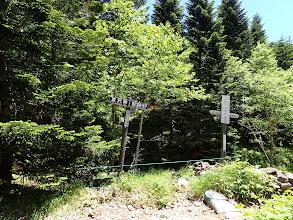 夏沢峠からの道と合流