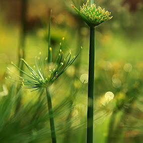 by Bagus Kusumawanto - Nature Up Close Other plants