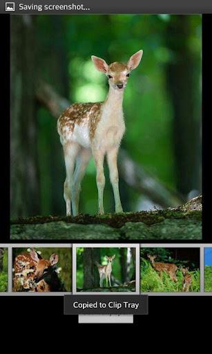 Deer  HD Wallpapers 1.2 screenshots 6