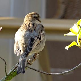 by Ashwanth Achu - Animals Birds