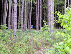 Photo: Entering the black forest - heavy spruce plantation