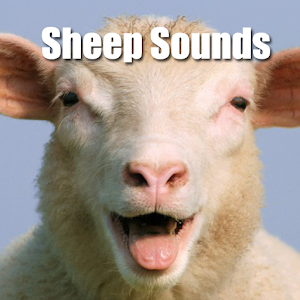 Sheep Sounds apk