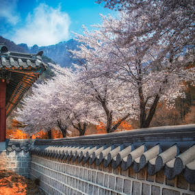 BEHIND THE MONASTERY WALL OF KOREA by Ronz'da Dezign - Nature Up Close Gardens & Produce ( pwcflowergarden )