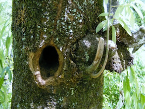 Photo: woodpeckers home