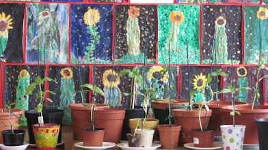 Photo: Sixth Class             Sunflowers