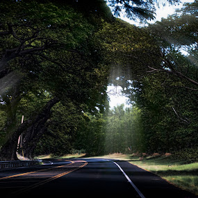 Maui Drive by Adriano Sabagala - Landscapes Travel