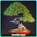 Japanese Bonsai Arts icon