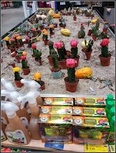 Photo: Cactuși (Cactaceae) -  din Turda, de pe Str. Stefan cel Mare, Nr.19, DEDEMAN - 2018.09.29