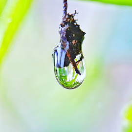 Embun pagi by Oengkas Wijaya - Instagram & Mobile Android ( macro, nature, macro photography, nature up close, borneo )