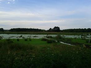 Photo: swamp