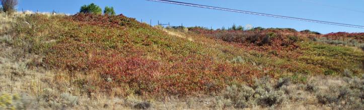Photo: Sumac turning colour everywhere.