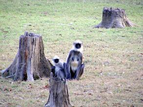 Photo: Curious monkeys