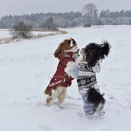 by Jana Kubínová - Animals - Dogs Playing