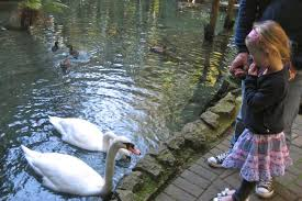 Image result for swans springs rotorua pigs
